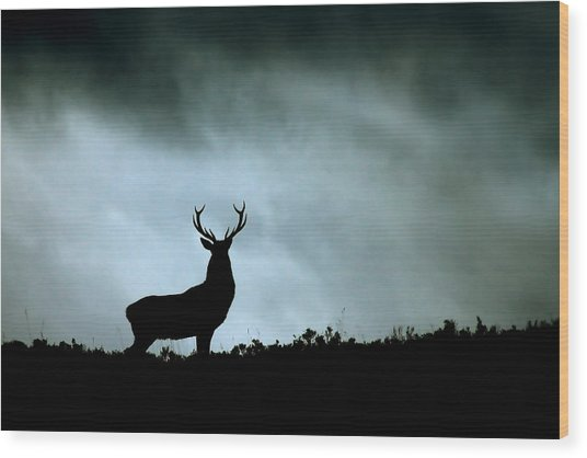 Stag Silhouette Wood Print