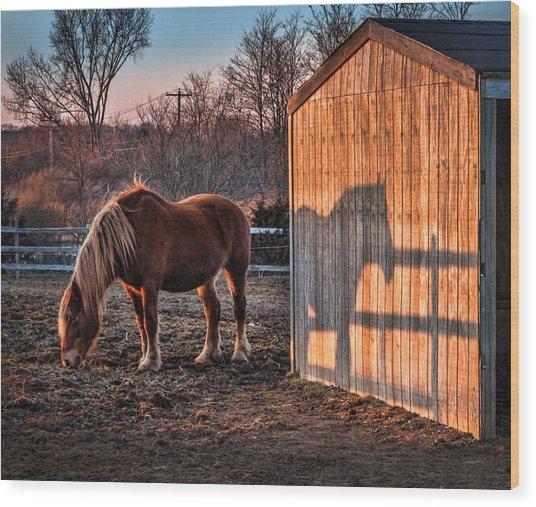 7056 Horse Shadow Wood Print by Deidre Elzer-Lento
