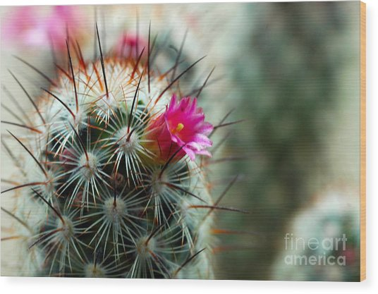 734a Tubular Cactus Flower Wood Print