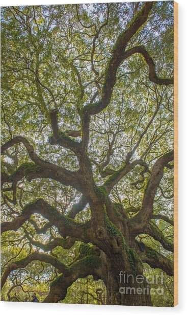 Island Angel Oak Tree Wood Print
