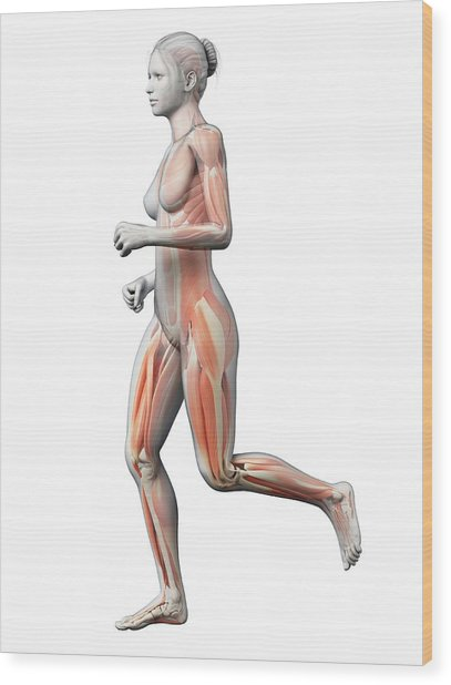 Muscular System Of Runner Wood Print by Sebastian Kaulitzki