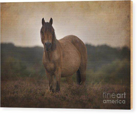 New Forest Pony Wood Print by Angel Ciesniarska