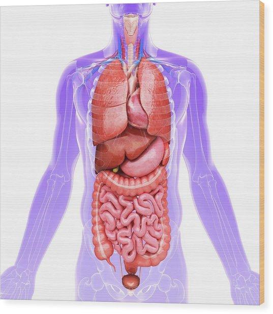 Human Internal Organs Wood Print by Pixologicstudio