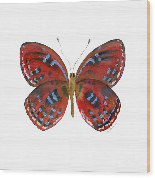 81 Paralaxita Butterfly Wood Print