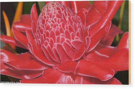 Flower For You  Wood Print by Gornganogphatchara Kalapun