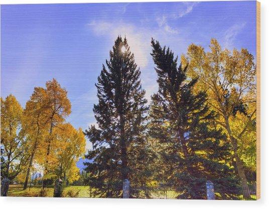 Banff Alberta Canada Wood Print by Paul James Bannerman