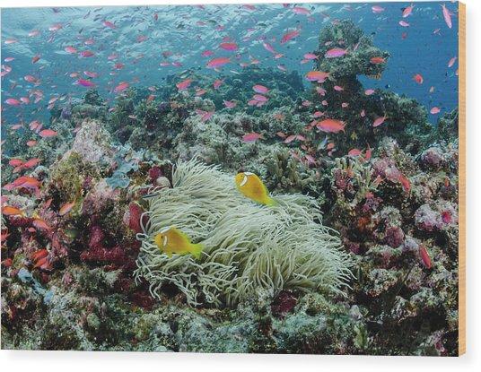 South Pacific, Solomon Islands Wood Print