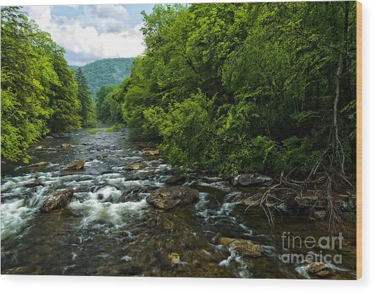 Spring Along Cranberry River Wood Print