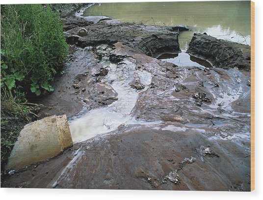 Water Pollution Wood Print by Robert Brook/science Photo Library