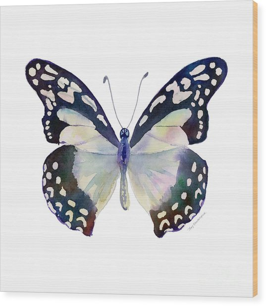 90 Angola White Lady Butterfly Wood Print