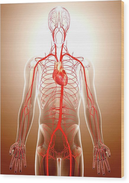 Cardiovascular System Wood Print by Pixologicstudio/science Photo Library