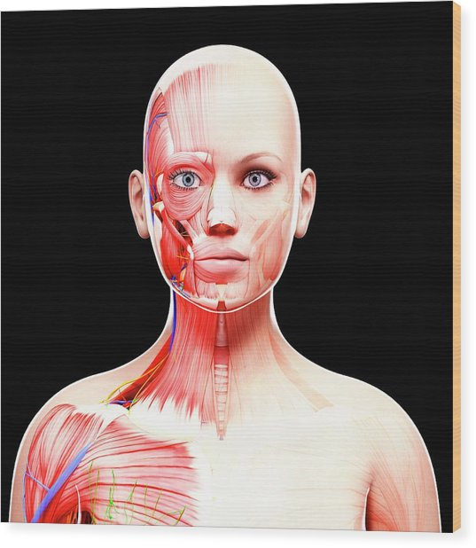 Female Anatomy Wood Print by Pixologicstudio/science Photo Library