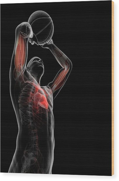 Male Anatomy Wood Print by Sciepro/science Photo Library