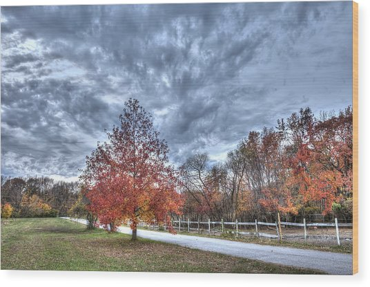 A Backroad In The Rural Countryside Of Maryland During Autumn Wood Print