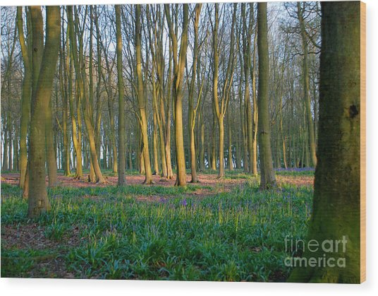 A Badbury Clump Evening Wood Print