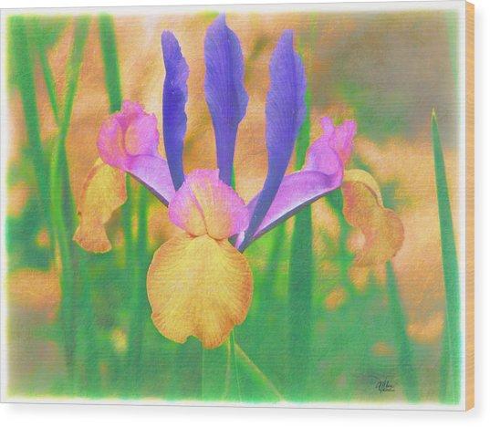 A Bearded Iris In My Vincent Van Gogh Garden Wood Print