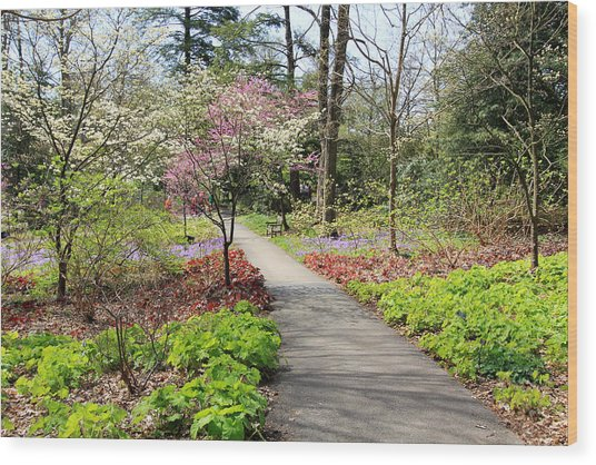 A Beautiful Spring Walk Wood Print