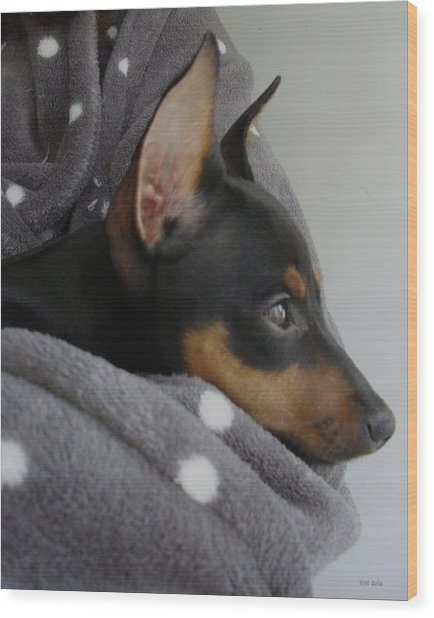 Miniature Pinscher  Wood Print