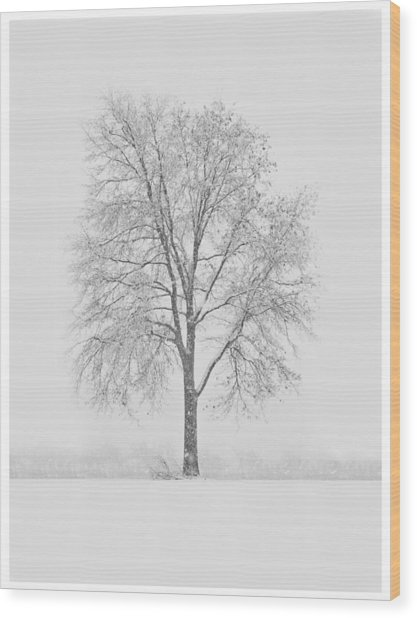 A Blizzard Moment Wood Print by Nancy Edwards