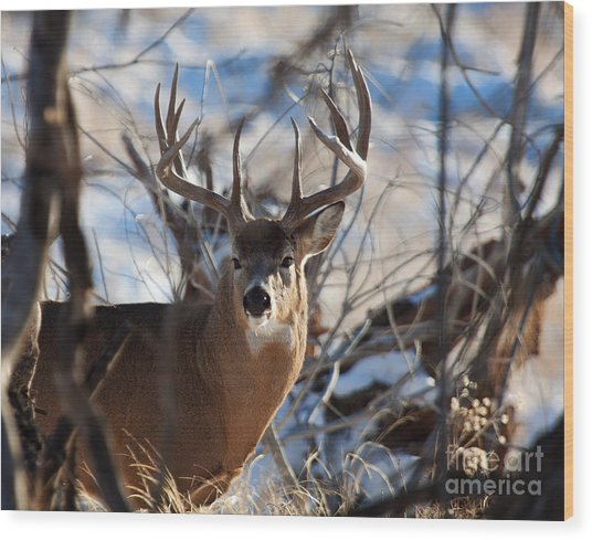 A Buck In The Bush Wood Print