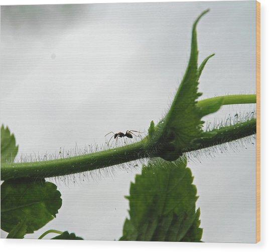 A Bugs Life Wood Print by Gopan G Nair