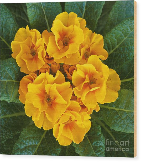 A Bunch Of Yellow Flowers Wood Print by Kenny Bosak