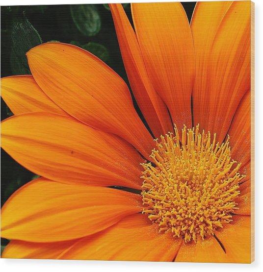 A Burst Of Orange Wood Print by Bruce Bley