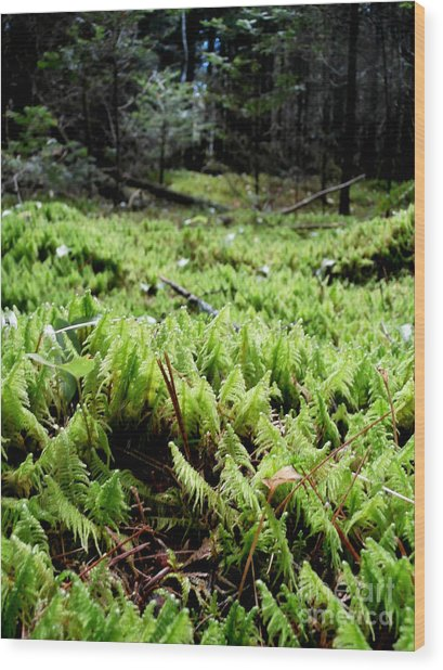 A Carpet Of Moss  Wood Print by Steven Valkenberg