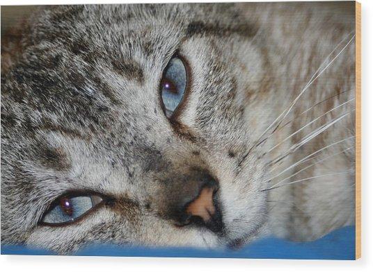 A Cat Named...blue Wood Print