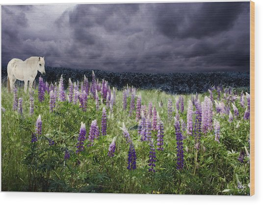 A Childs Dream Among Lupine Wood Print