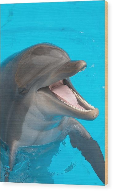 A Close-up Of A Happy Dolphin Swimming Wood Print by To_csa