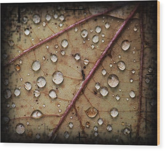 A Close Up Of A Wet Leaf Wood Print by Andrew Sliwinski