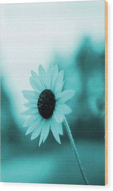 A Cold Sun Wood Print