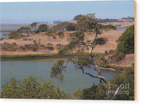 A Cove In Late Summer At Elkhorn Slough Wood Print
