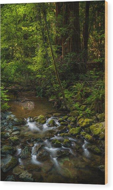 A Creek Among Giants Wood Print