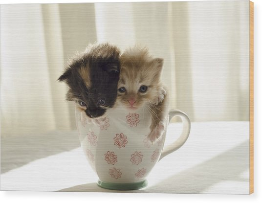 A Cup Of Cuteness Wood Print