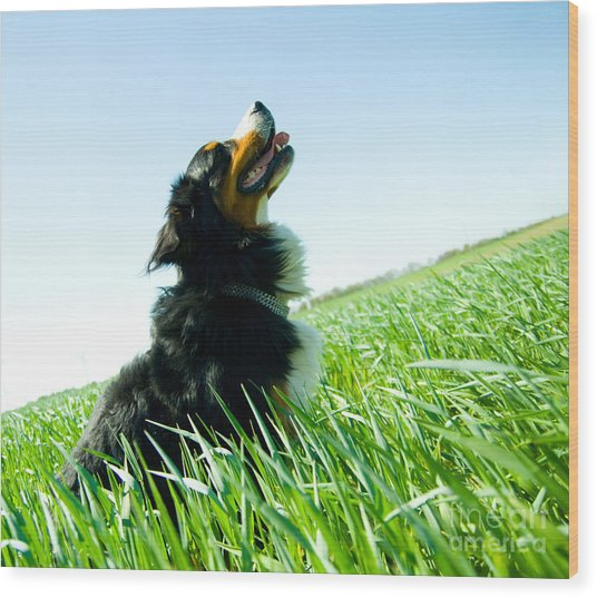 A Cute Dog On The Field Wood Print