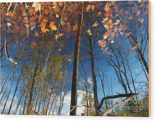 A Different Side Of Autumn Wood Print