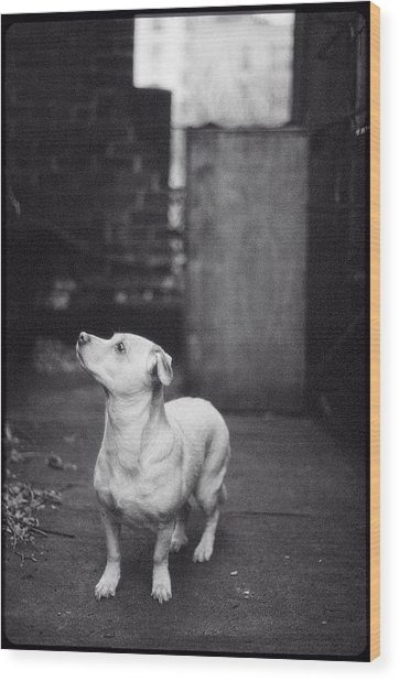 A Dog On The Roof In New York City Wood Print
