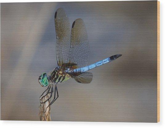 A Dragonfly Iv Wood Print