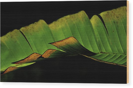 A Floating Heliconia Leaf Wood Print