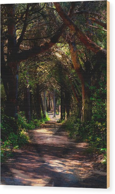 A Forest Path -dungeness Spit - Sequim Washington Wood Print
