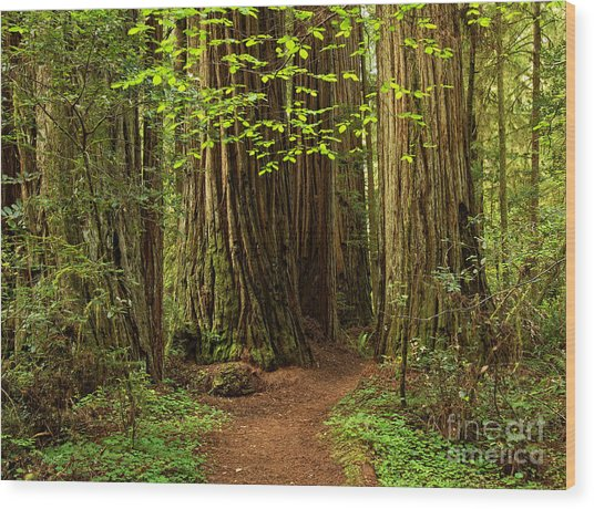 A Forest Welcome Wood Print