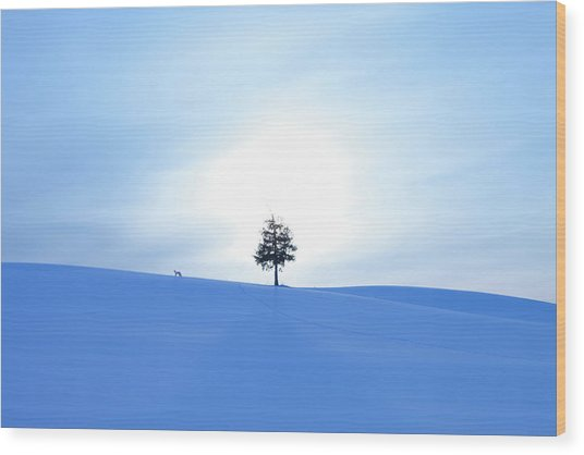 A Fox And A Tree In Snow Field Wood Print by Ichiro