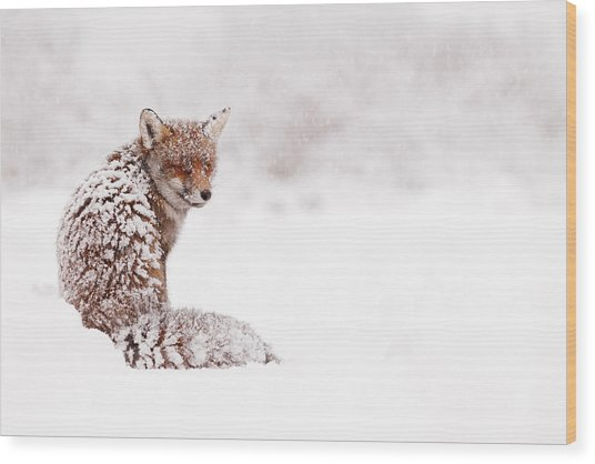 A Red Fox Fantasy Wood Print