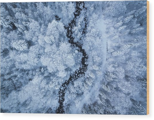 A Freezing Cold Beauty Wood Print