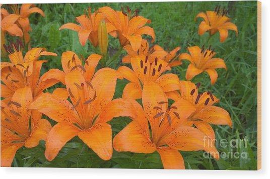 A Garden Full Of Lilies Wood Print