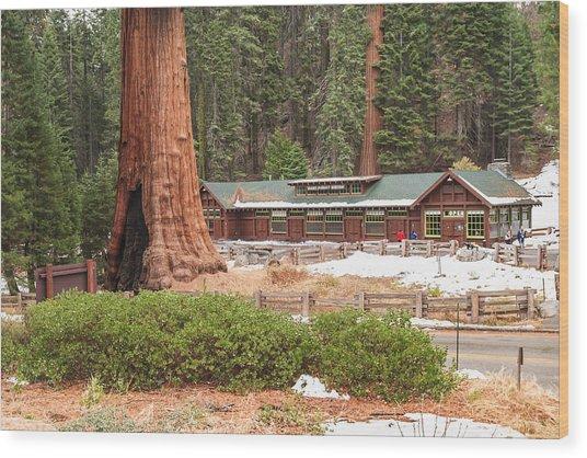 A Giant Among Trees Wood Print