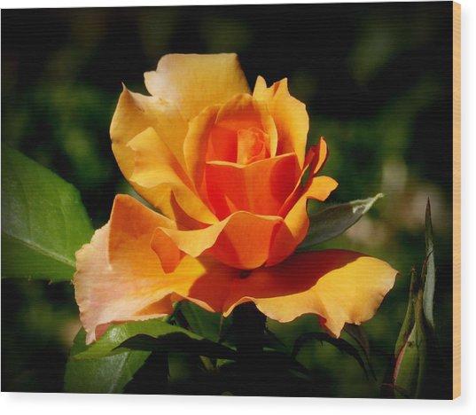 A Golden Rose Wood Print by Bishopston Fine Art