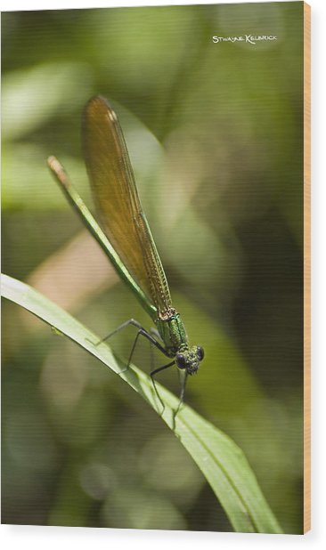 Wood Print featuring the photograph A Green Dragonfly by Stwayne Keubrick